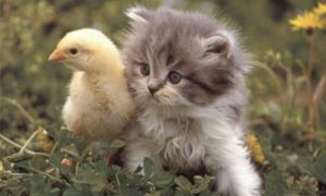 animales-domesticos.jpg